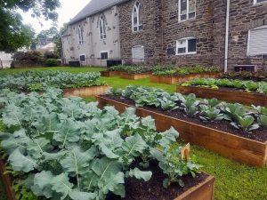 Trellis For Tomorrow Program: Food For All